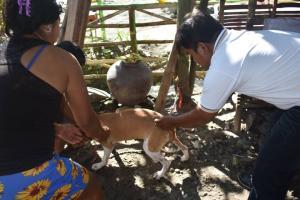 Moncada Agriculture Conduct Massive Anti Rabies-Vaccination at Brgy. TubecTubang Moncada Tarlac